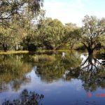 Eastern wetland