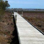 Boardwalk view.