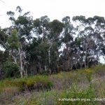 Wandoo woodland.