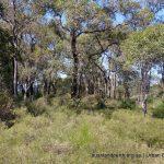 Cardup Bushland