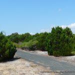 Rottest Cypress.