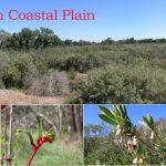 Coastal Plain.