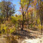 Rehabilitated bushland.