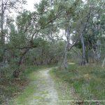Path through banksia woodland.