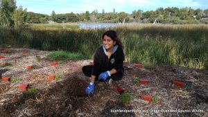 Lake Claremont bushland rehabilitation volunteering.