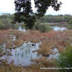 Lake Claremont wetland.