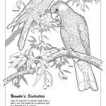 Artwork. Baudin's Cockatoo.