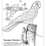 Artwork. Carnaby's Cockatoo.
