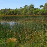 Superb healthy wetland