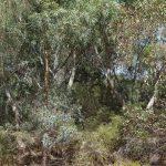 Healthy bushland.