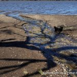 Wetland Outfall.