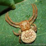 Unidentified spider. Star Swamp.