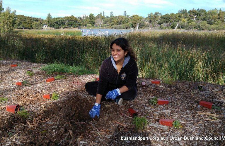 Planting at Lake Claremont